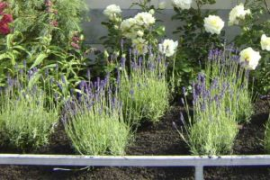 Planten voor in je tuin door Spruit en van der Velde